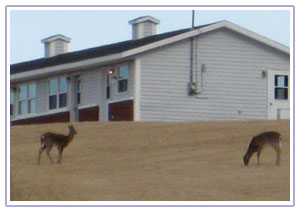 Deer visiting Burton's Sunset Oasis Motel in winter. A great place to take your vacation all year round.